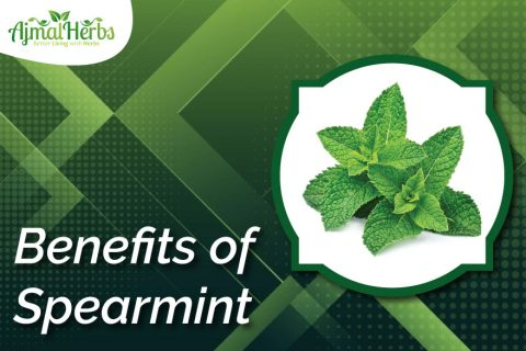 Spearmint-podina-kohi (spearmint tea benefits)