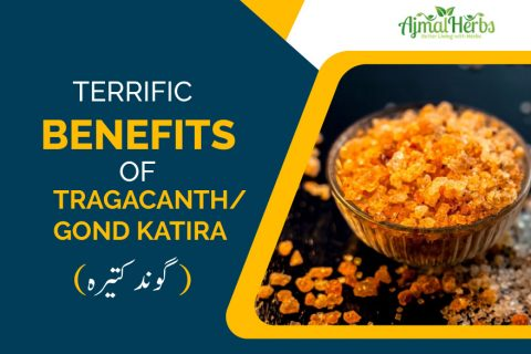 Terrific Benefits Of Tragacanth/Gond Katira (گوند کتیرہ)